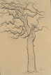 tree study (graphite on paper) by artist Dave Hewson